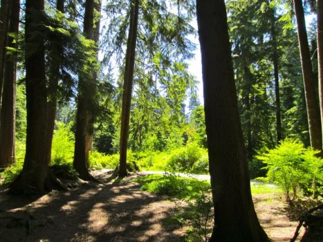 Experience The First Nations History Of Stanley Park Where Many Aboriginal Peoples Lived In Villages Before Being Moved To Settlements Between 1870s