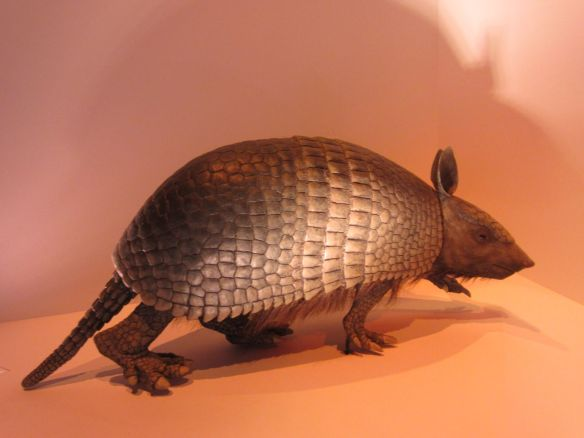 Did you know the nine-banded armadillo is the state mammal of Texas?