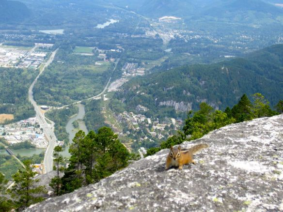 chipmunk & Squamish