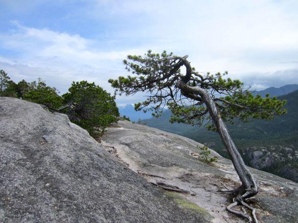 tree on North Peak